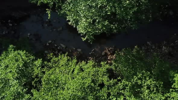 Flying Above Densely Wilderness Trees, Between Which a River Flows