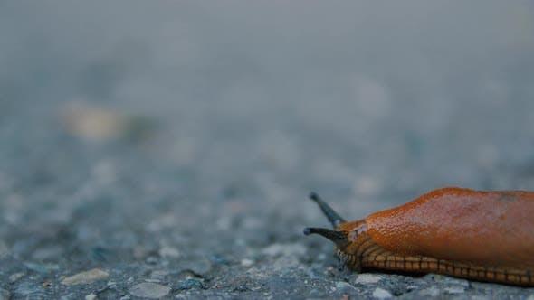 Crawl Slug On The Road