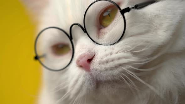 Thumbnail for Cute Domestic Pet in Round Transparent Glasses. Furry Cat on Yellow Background in Studio. Animals
