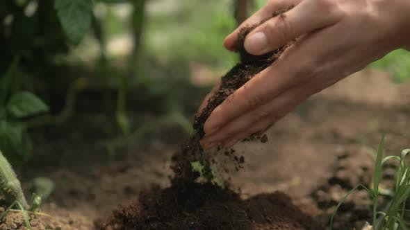 Thumbnail for Soil Cultivated Dirt, Earth, Ground, Agriculture Land Background Nurturing Baby Plant on Hand.