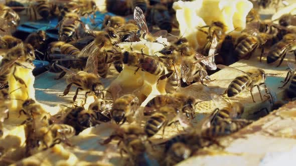 Thumbnail for Frames of a Beehive