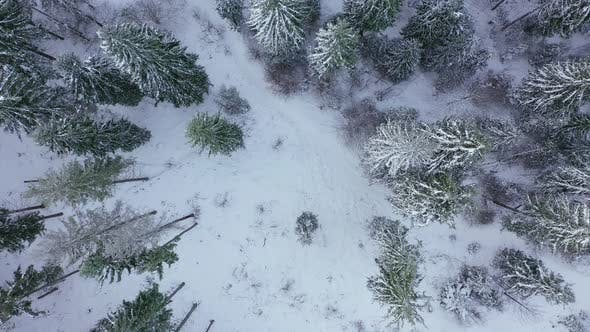 Thumbnail for Rise Over the Winter Snow-covered Forest. Winter Forest As Background
