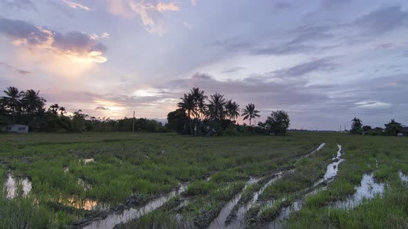 Timelapse sunset over a rice field