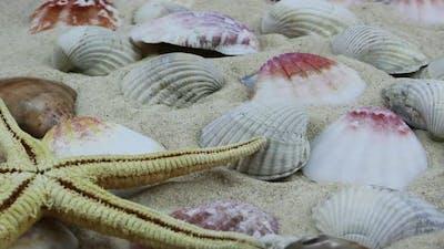 Sea Creatures 8