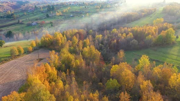 Thumbnail for Flying Above Autumn Birch Forest and Countryside Hills