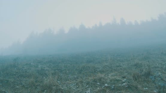 Thumbnail for Walking On Fog To Forest