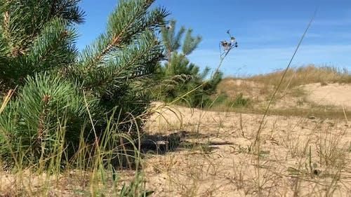 Strandsand und Bäume
