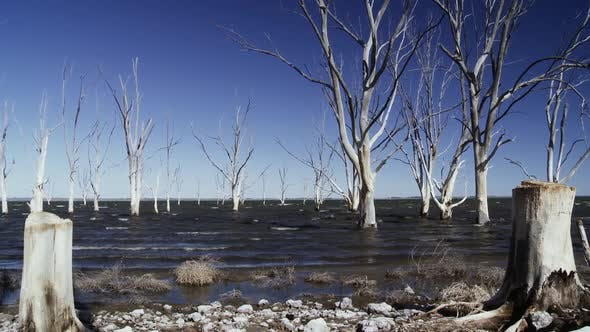 Thumbnail for Dry Trees on Water in Lake Epecuen, Argentina.