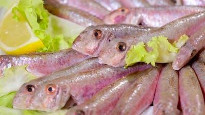 Raw Tasty Fish Gourmet