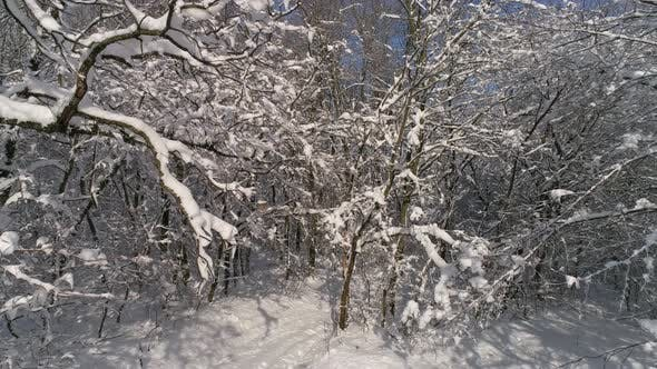 Thumbnail for Beautiful Snow Winter Forest, Slider Dolly Shot