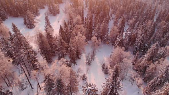 Flight Over Winter Forest Landscape Panorama