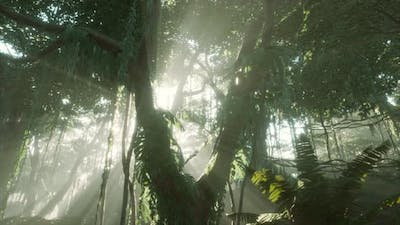 Deep Tropical Jungle Rainforest in Fog
