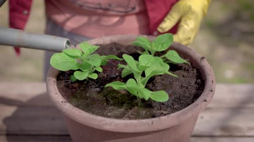 Close-up. The Process of Planting Plant Pots in Pots. Green Seedlings Are Planted in the Prepared