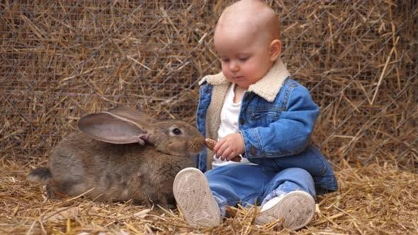 Thumbnail for Cute Little Caucasian Baby Feeding Brown Rabbit on the Farm