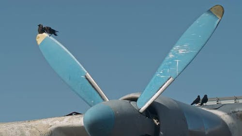 Crows Sit on the Blades of a Propeller