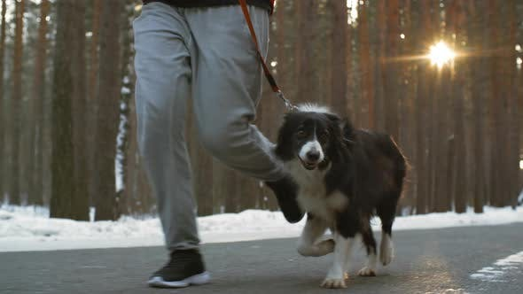 Thumbnail for Border Collie Running on Forest Road