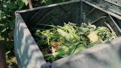 Bio container of organic wastes