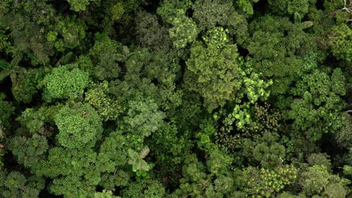Luftaufnahme von oben bewegt sich über die Baumkronen vieler Baumarten