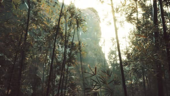Green Bamboo Forest with Morning Sunlight
