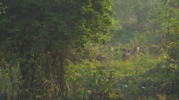 Thumbnail for Deers Herd Walks Along Green Grass in Forest Slow Motion