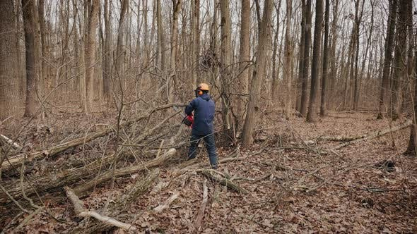 Forester Using a Chainsaw Makes Clearing the Forest
