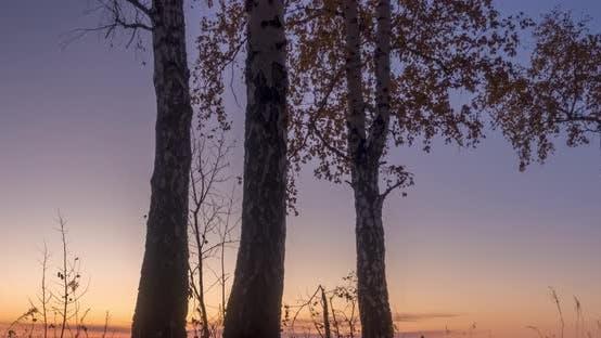 Thumbnail for Wiesenzeitraffer zur Sommer- oder Herbstzeit. Rural Feld Hexe Sonnenstrahlen, Bäume und grünes Gras