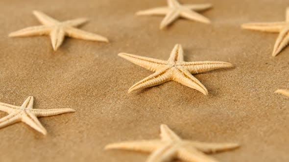 Thumbnail for Many Dried Sea Stars on Sand, Rotation