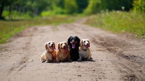 Pet animals outdoors