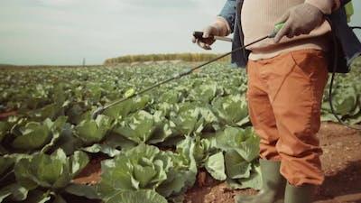 Black Man in Mask Spraying Cabbage on Farm Field