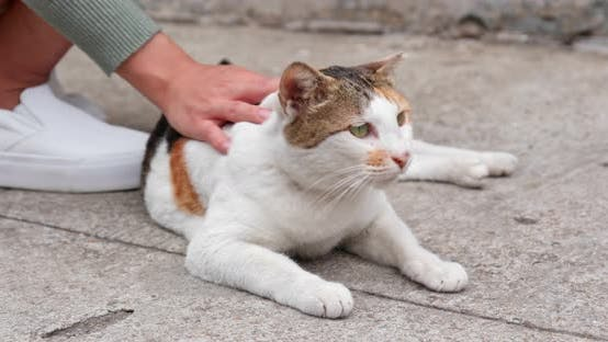 Cover Image for Woman hand touching on street cat