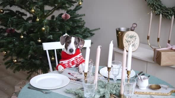 Celebrating NY Christmas at Home
