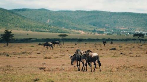 Wild Animals in Kenya