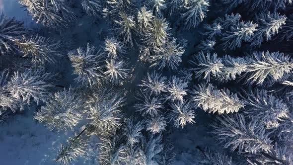 Vue des oiseaux de la forêt d'hiver gelée