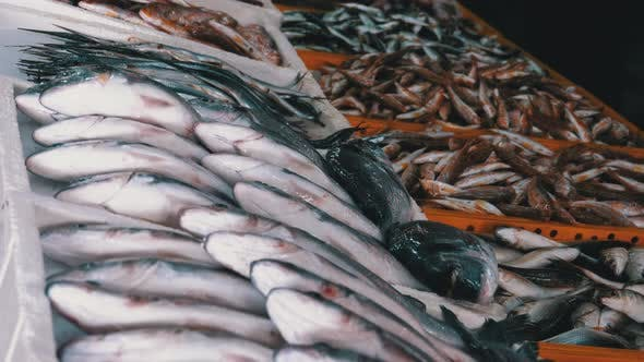 Thumbnail for Fresh Sea Fish in Ice Sold on the Showcase of Seafood Street Market
