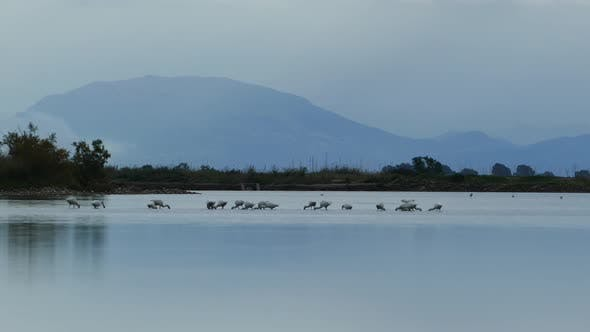 Cover Image for Eurasian spoonbill searching for food