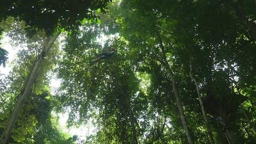 Man Zip Line Flight In Jungle