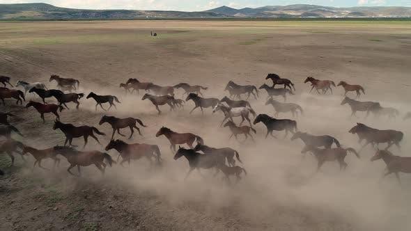 Thumbnail for Aerial Running Horses