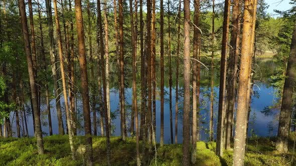 Thumbnail for Aerial View of the Lake and Forest in Finland