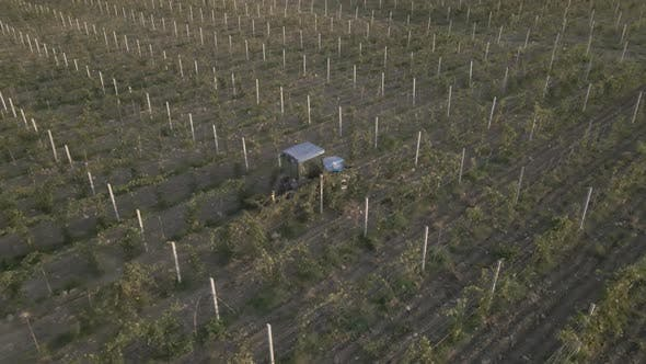 Aerial view farmer on tractor mowing weeds between rows of grapevines in vineyard landscape