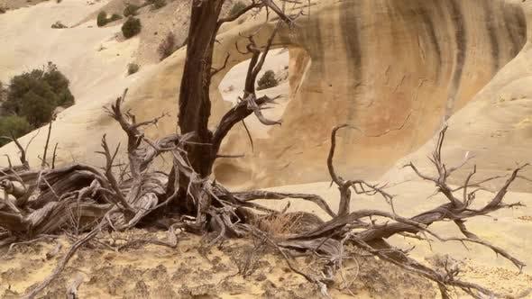 Thumbnail for Desert Scenic