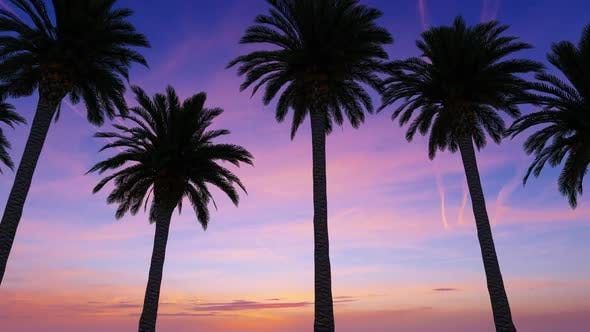 Thumbnail for Driving Through The Palm Trees In Sunset