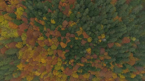 Autumn Colorful Forest in Bulgaria