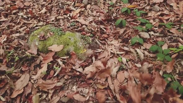 Thumbnail for Autumn Leaves Foliage