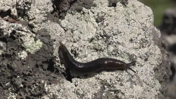 Thumbnail for Slug