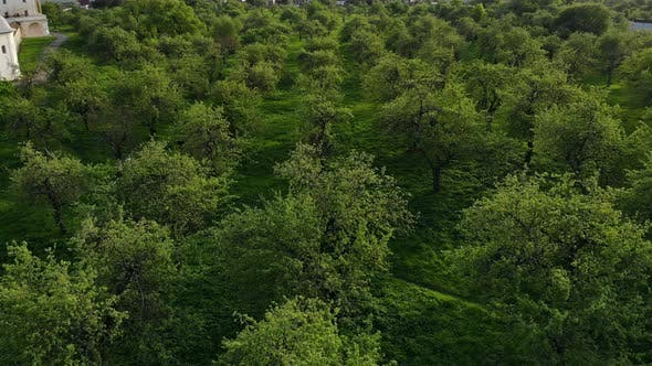 Cover Image for Beautiful Top View of Green Forest and Grass with Path