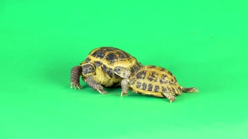 Turtles on a Green Background Screen