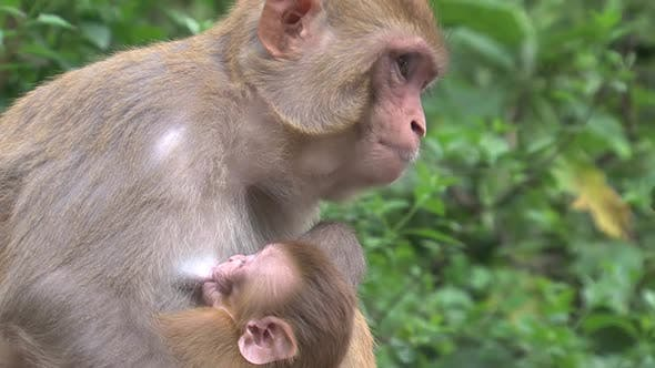 Thumbnail for Close up from a monkey