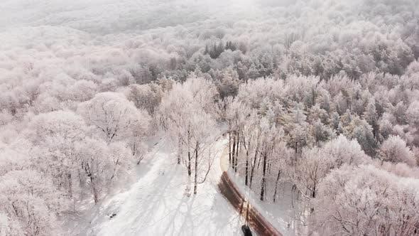 Кинематографическая вид человек стоит у автомобиля с лесной панорамой