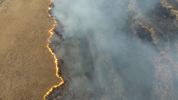 Thumbnail for Aerial Shot of Huge Cane Wetland Covered with Orange Flame and Smoke in Spring