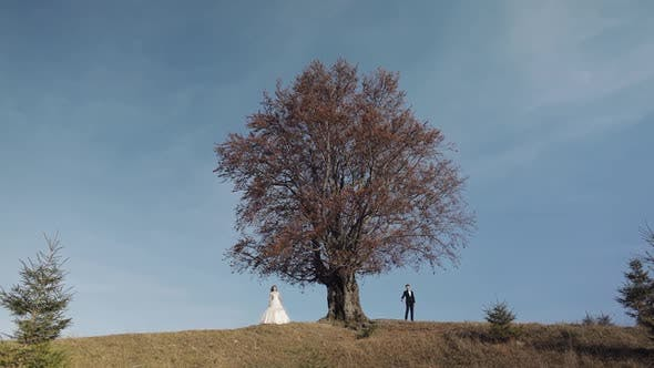 Cover Image for Newlyweds. Caucasian Groom with Bride Near Beautiful Autumn Tree. Wedding Couple